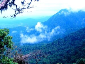 Things to do in Agumbe